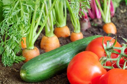 Organic Gardening Solutions
